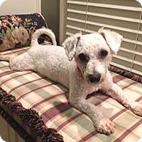 Adopt A Pet :: Bosley - Atlanta, GA