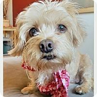 Adopt A Pet :: Peaches - Renton, WA