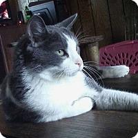 Adopt A Pet :: Orville - Minneapolis, MN