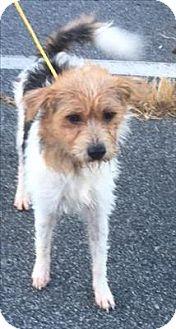Terrier (Unknown Type, Medium) Mix Dog for adoption in Dallas, Georgia - 16-09-2660  Oakley