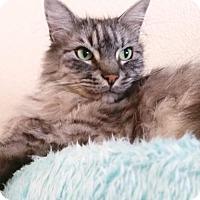 Adopt A Pet :: Rodney - Alameda, CA