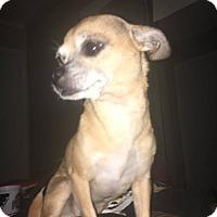 Adopt A Pet :: Lola (adoption pending) - Pataskala, OH