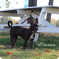 Chihuahua/Terrier (Unknown Type, Small) Mix Dog for adoption in Texarkana, Arkansas - Emma