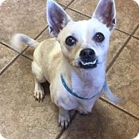 Adopt A Pet :: Cash 110040 - Joplin, MO