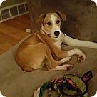 Adopt A Pet :: Champer