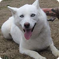 Adopt A Pet :: Grace - Bristol, VA