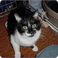 Adopt A Pet :: Valerie>^.,.^< $35 adoption - Union Lake, MI