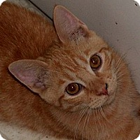 Adopt A Pet :: Sunny D - Milford, OH