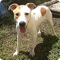 Adopt A Pet :: Patches - St. Petersburg, FL