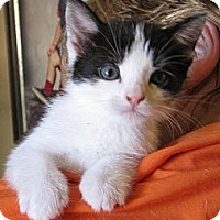 Adopt A Pet :: Moo - Kirkwood, DE