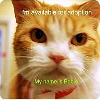 Adopt A Pet :: Babie - Modesto, CA