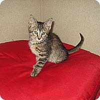 Adopt A Pet :: ELEANOR -2014 - Hamilton, NJ