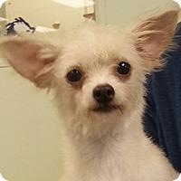 Adopt A Pet :: Tahina - Orlando, FL
