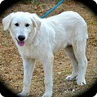 Adopt A Pet :: Kenai - Austin, TX
