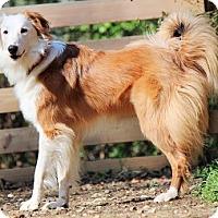 Adopt A Pet :: Jax - Oliver Springs, TN