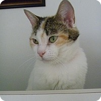Adopt A Pet :: Cuddles - Hamburg, NY