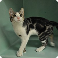 Adopt A Pet :: Richard - Rockaway, NJ