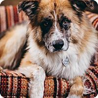 Adopt A Pet :: Barton - Portland, OR