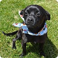 Adopt A Pet :: Frankie - Aurora, CO
