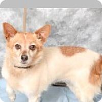 Adopt A Pet :: Abigail - Pittsboro, NC