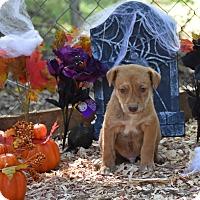 Adopt A Pet :: Lanny - Charlemont, MA