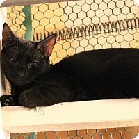 Adopt A Pet :: Lexus - Carlisle, PA