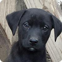 Adopt A Pet :: Nubs Adopted - Preston, CT