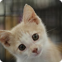 Adopt A Pet :: Jolly Rodger - Richmond, VA