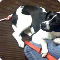 Adopt A Pet :: JAYCEE - Raleigh, NC