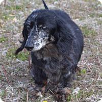 Adopt A Pet :: Princess - Larned, KS