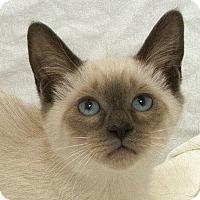 Adopt A Pet :: Kandiss M - Sacramento, CA