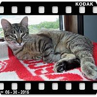 Adopt A Pet :: SOFIA - Medford, WI
