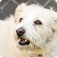 Adopt A Pet :: Austin - Worcester, MA