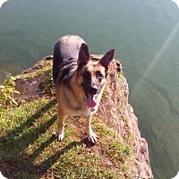 Adopt A Pet :: Ebony - Lucknow, ON