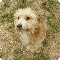 Terrier (Unknown Type, Medium) Dog for adoption in Washington, D.C. - Kelly (Has Application)