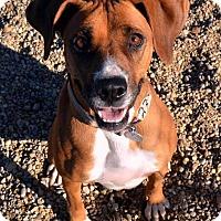 Adopt A Pet :: Dawn - Lacon, IL