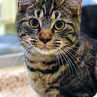 Adopt A Pet :: Renn - Aiken, SC