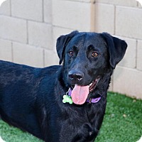 Adopt A Pet :: Travis - Litchfield Park, AZ