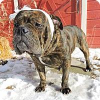 Adopt A Pet :: Marge - Salt Lake City, UT