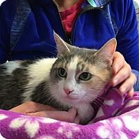Adopt A Pet :: Colleen - Warwick, RI
