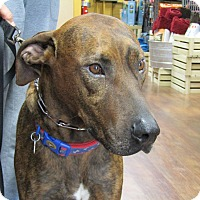 Adopt A Pet :: Murphy - Suwanee, GA