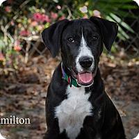 Adopt A Pet :: Hamilton - Weeki Wachee, FL