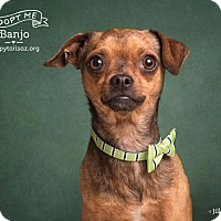Adopt A Pet :: Banjo - Chandler, AZ