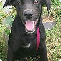 Adopt A Pet :: Kelso - Albany, NY