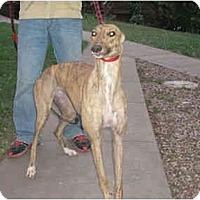 Adopt A Pet :: Crispy (Riverview Crispy) - Chagrin Falls, OH