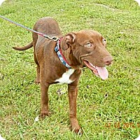 Adopt A Pet :: Brady - Lewisville, IN