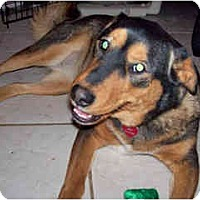 Adopt A Pet :: Sera - Scottsdale, AZ