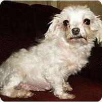 Adopt A Pet :: Eileen - Mooy, AL