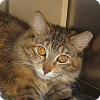Adopt A Pet :: TAMMY - 2014 - Hamilton, NJ