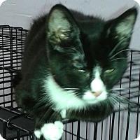 Adopt A Pet :: Nick - Whittier, CA